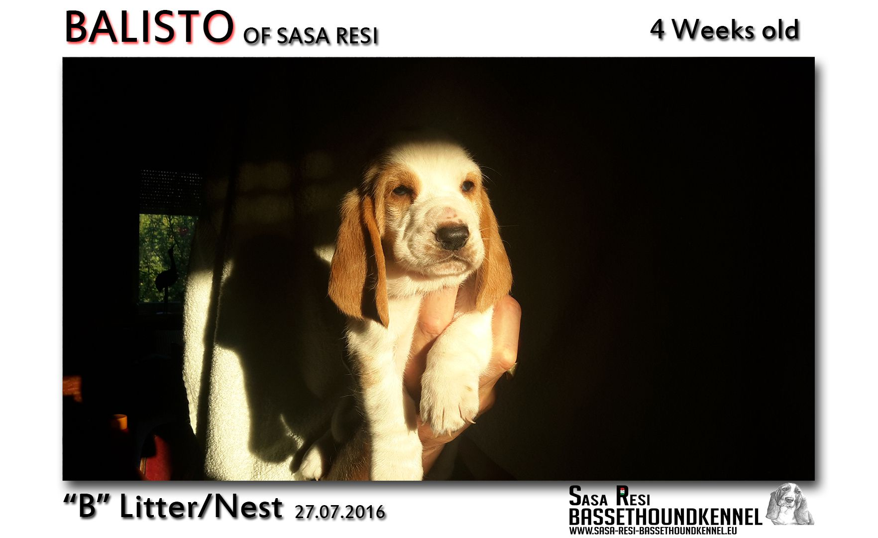 1 compressed 10 SaSa ReSi Bassethoundkennel