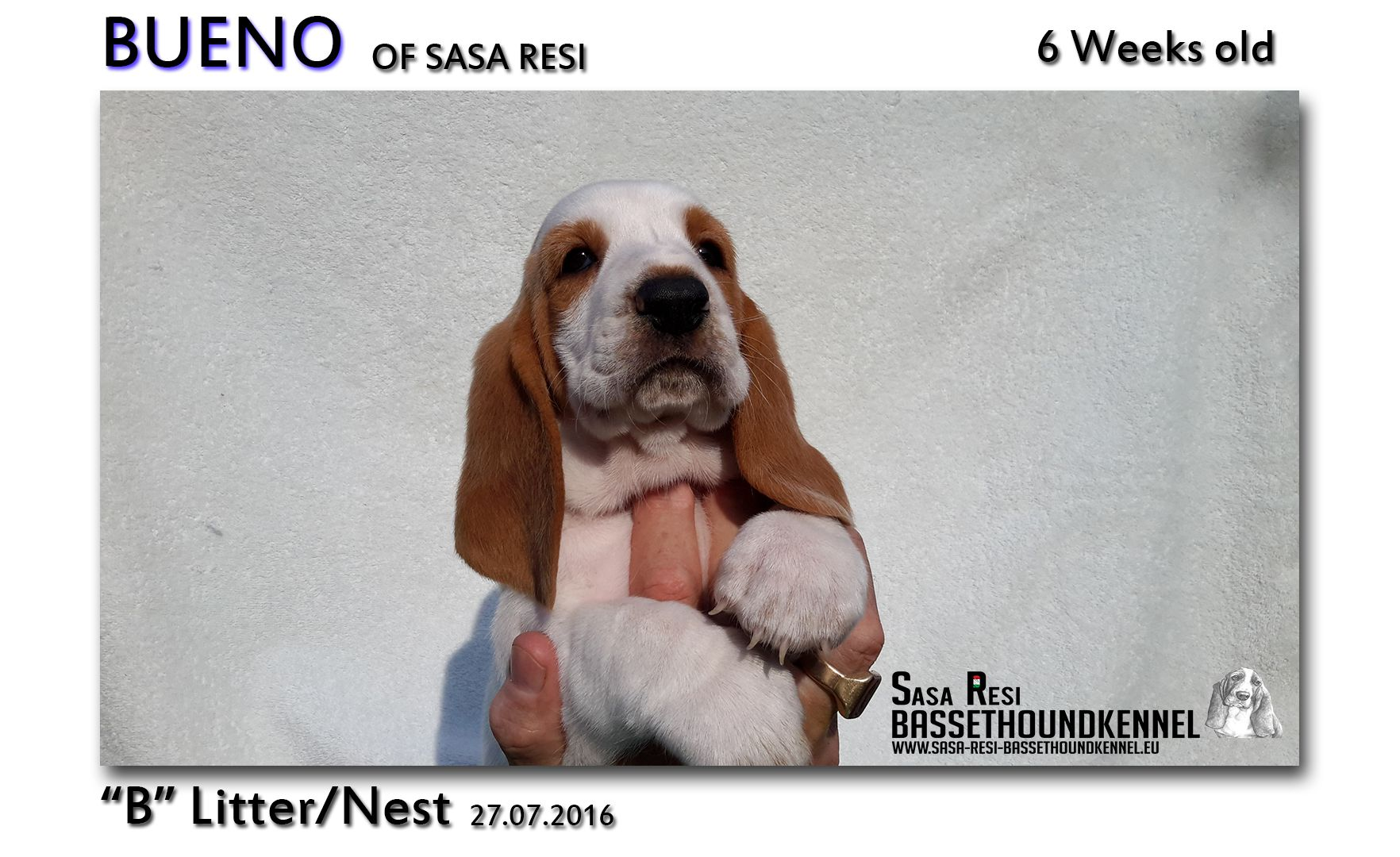 1 compressed 13 SaSa ReSi Bassethoundkennel