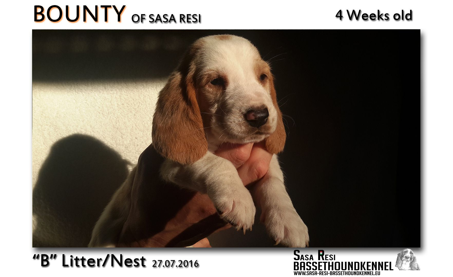1 compressed 4 SaSa ReSi Bassethoundkennel