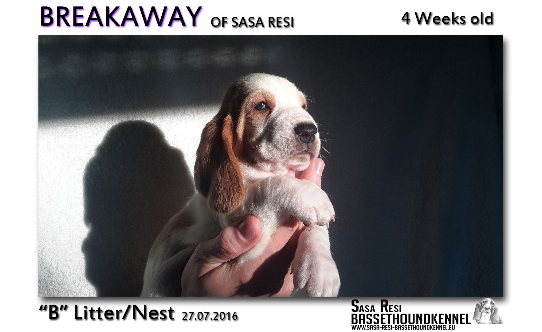 1 compressed 6 SaSa ReSi Bassethoundkennel