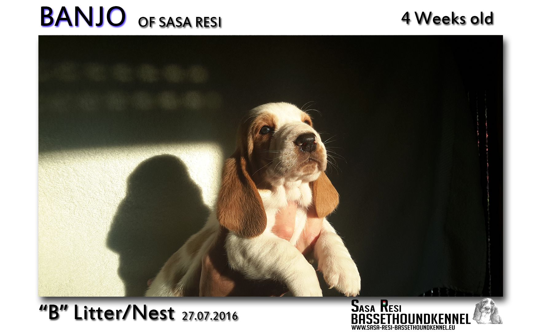1 compressed 8 SaSa ReSi Bassethoundkennel