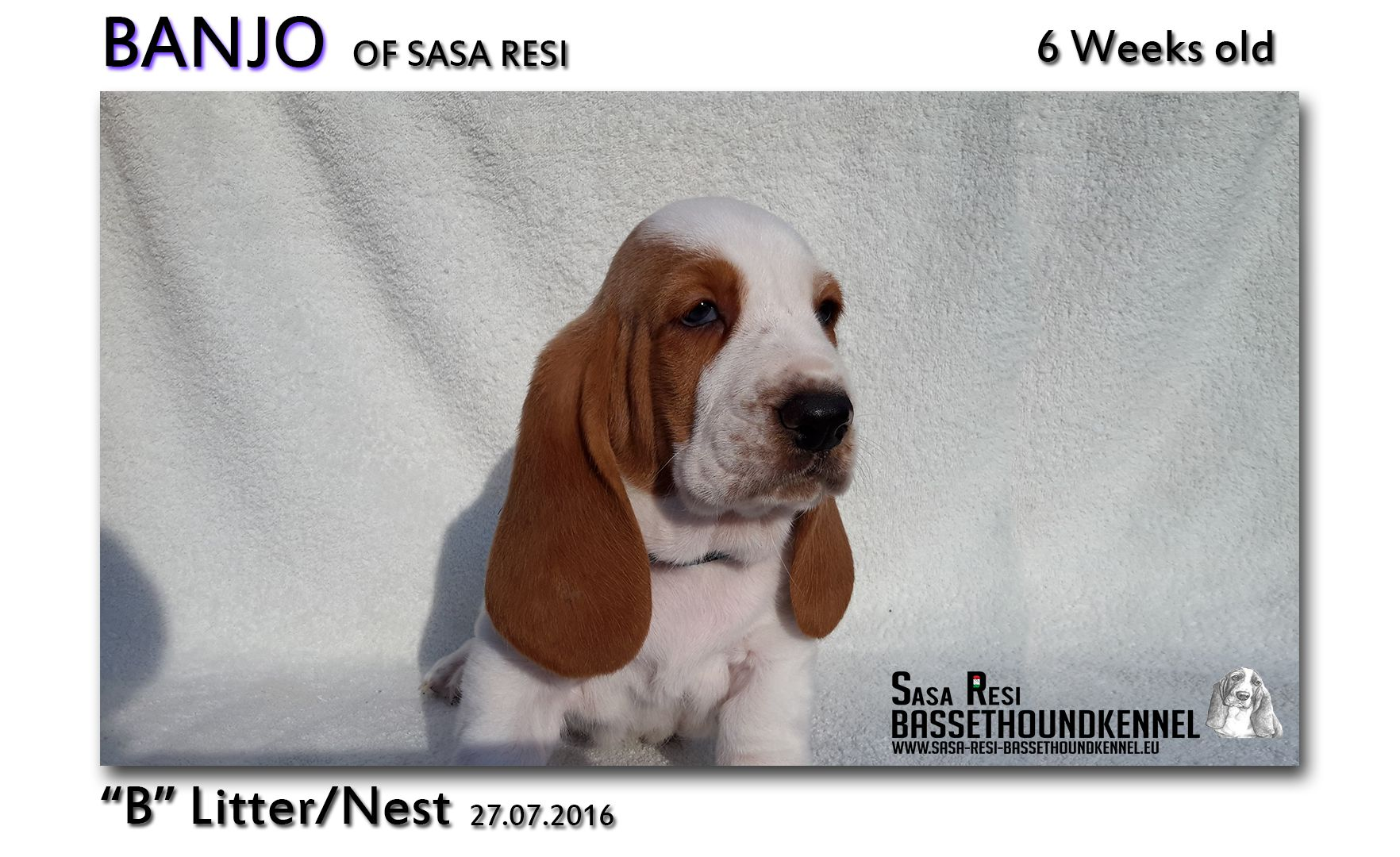 1 compressed 9 SaSa ReSi Bassethoundkennel