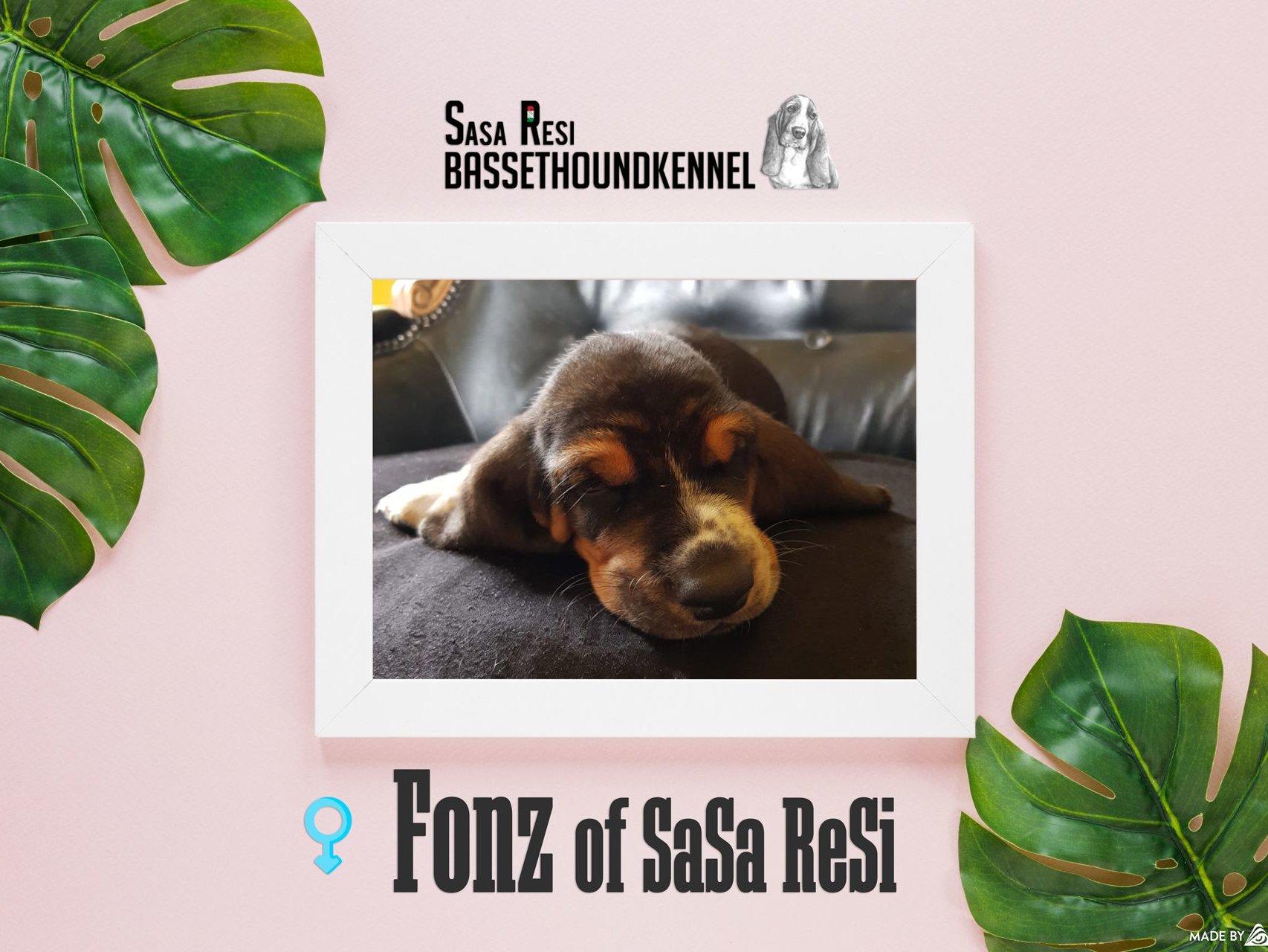 fonz 1 uai SaSa ReSi Bassethoundkennel